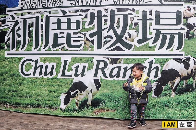 [旅遊] 台東。綠野緩坡上的牧場「初鹿牧場」放心自由享受生活