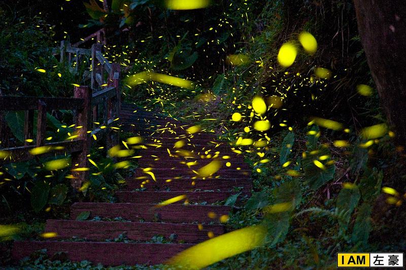 [國內旅遊] 嘉義阿里山。圓潭生態園區 賞成千上萬的螢火蟲!