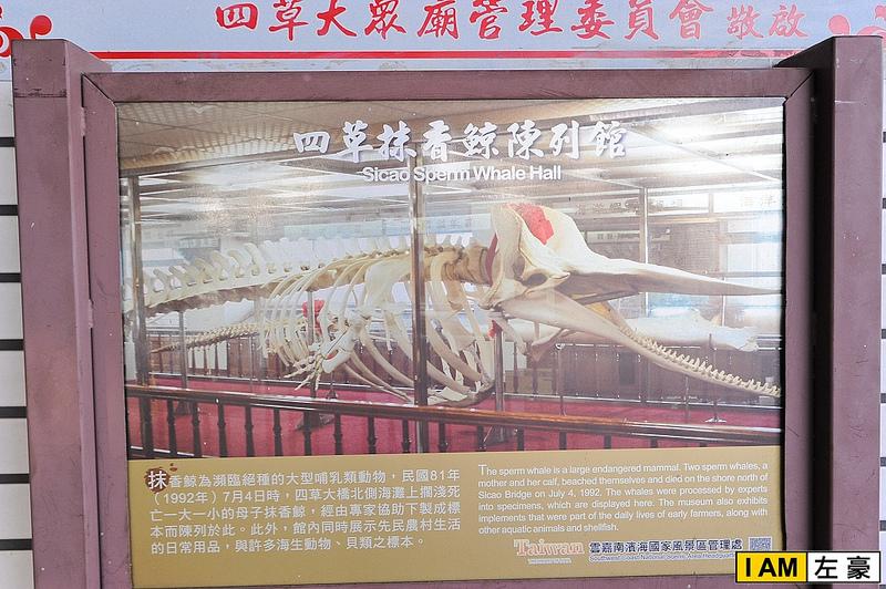 [旅遊] 台南。四草抹香鯨博陳列館