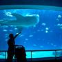 [遊記] 屏東。國立海洋生物博物館 (帶小泡菜看大魚去)