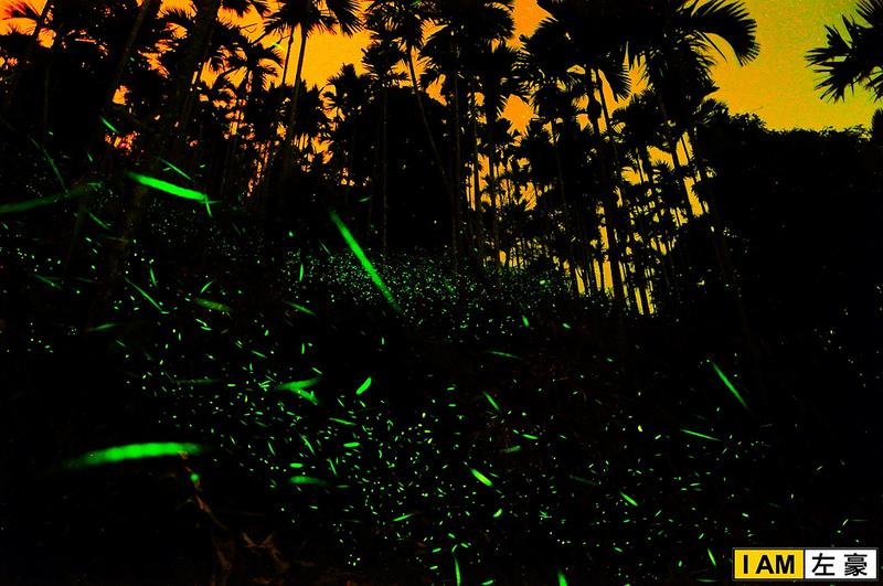 [昆蟲] 台南。梅嶺  螢火蟲的故鄉