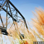 [風景] 舊鐵橋溼地公園 – 芒草