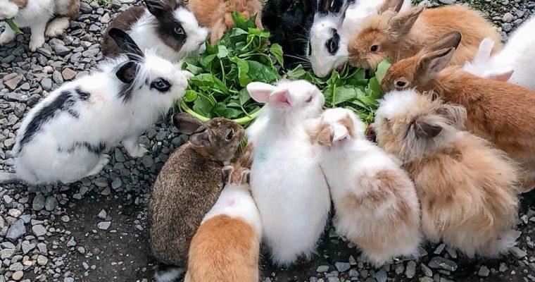 屏東旅遊 蕭家大院兔子寵物餐廳 走路都會撞到兔子的地方 !