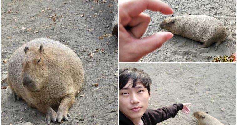 台南景點 頑皮世界 票價優惠、交通懶人包 <南台灣最大動物園找水豚、草泥馬好好玩>